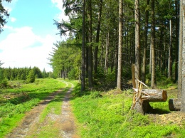 Trail bei Willebadessen